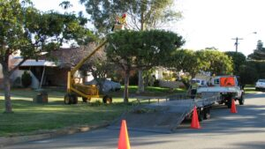 governement street tree pruning 02