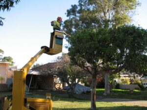 governement street tree pruning 03