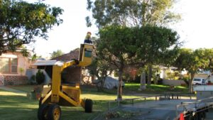 governement street tree pruning 04