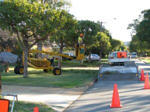 governement street tree pruning 05