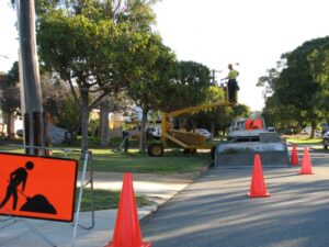 governement street tree pruning 06