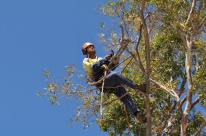 pruning climbers 01