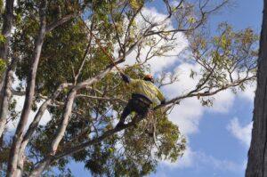 pruning climbers 02