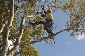 pruning climbers 03