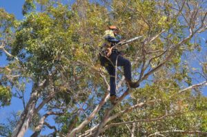 pruning climbers 04