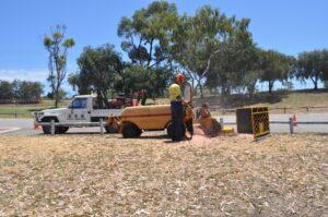 stump grinding large grinder 05