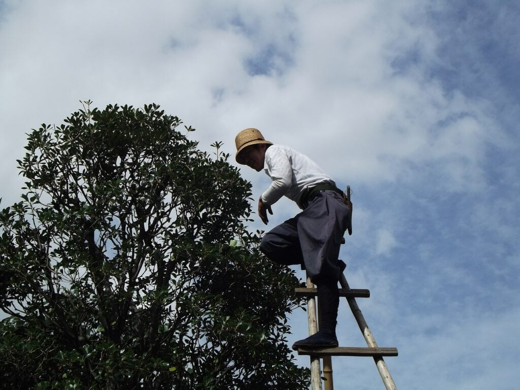 tree pruning professionals