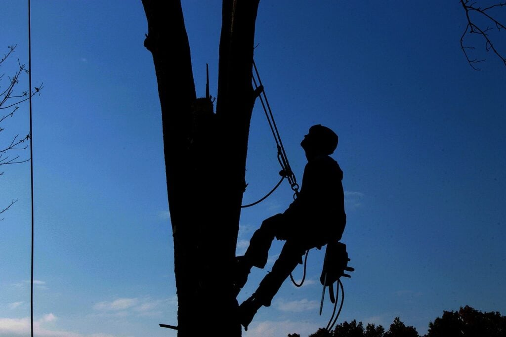 tree service melbourne