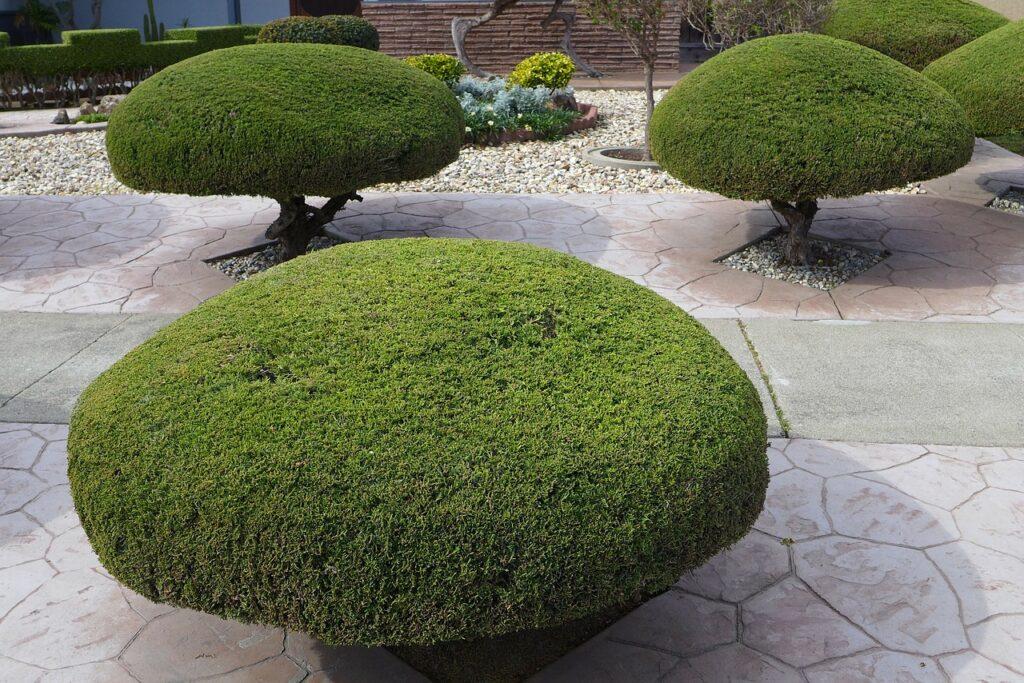 trees services arborist