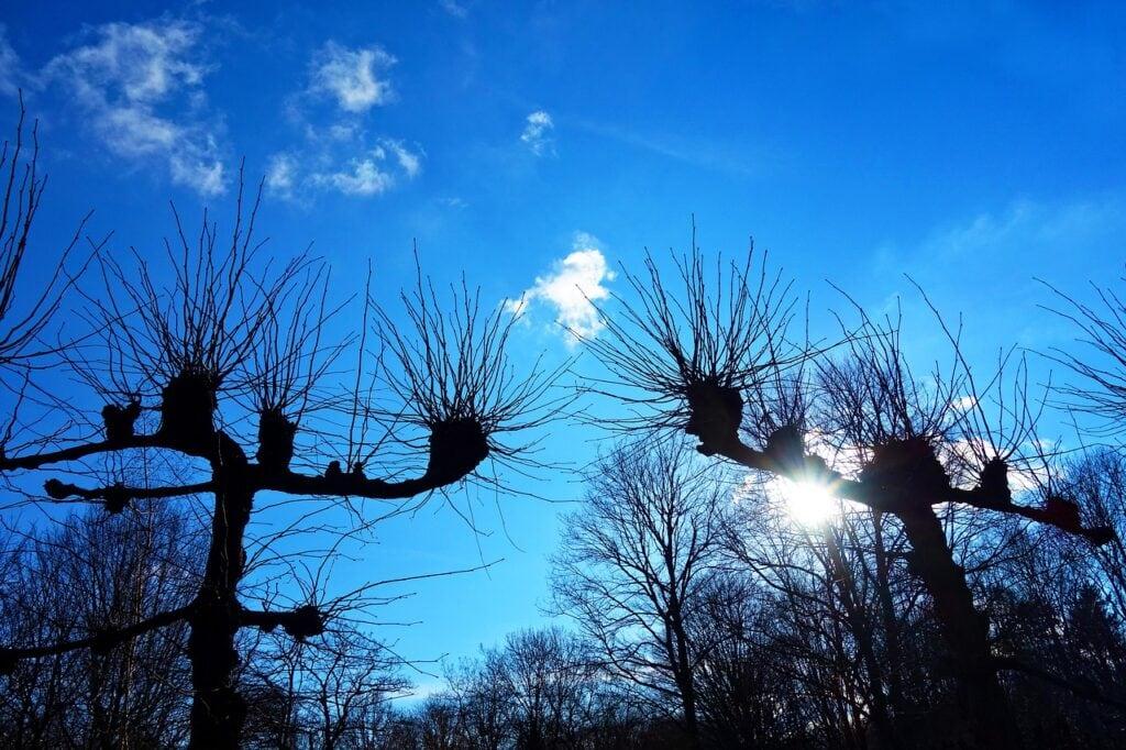 tree care professionals melbourne